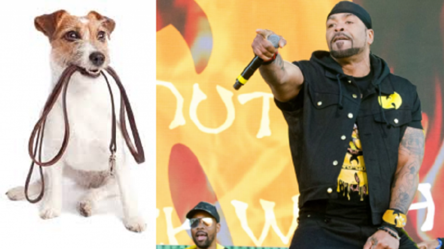 Le Wu-Tang Clan VS le Woof-Tang Clan ?