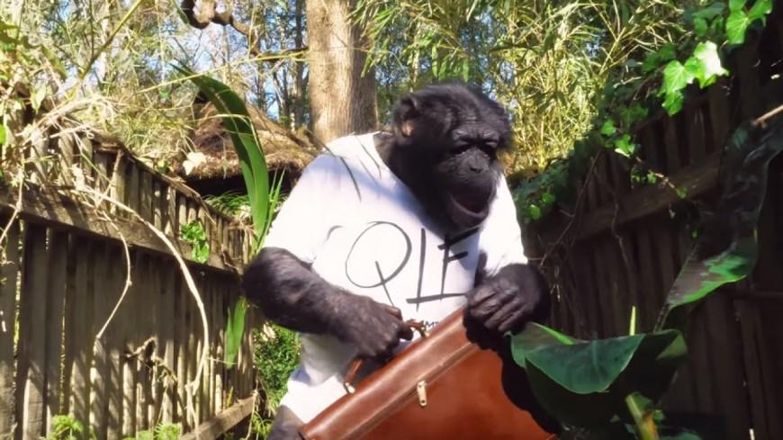PNL envoie ''Mowgli chercher médaille'' !