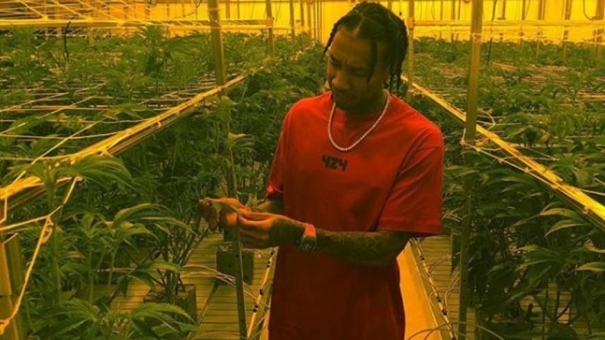 Tyga lance sa propre variété de weed!