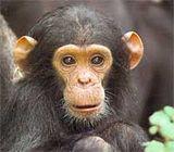 Buzz du net : Les singes alcooliques!!!